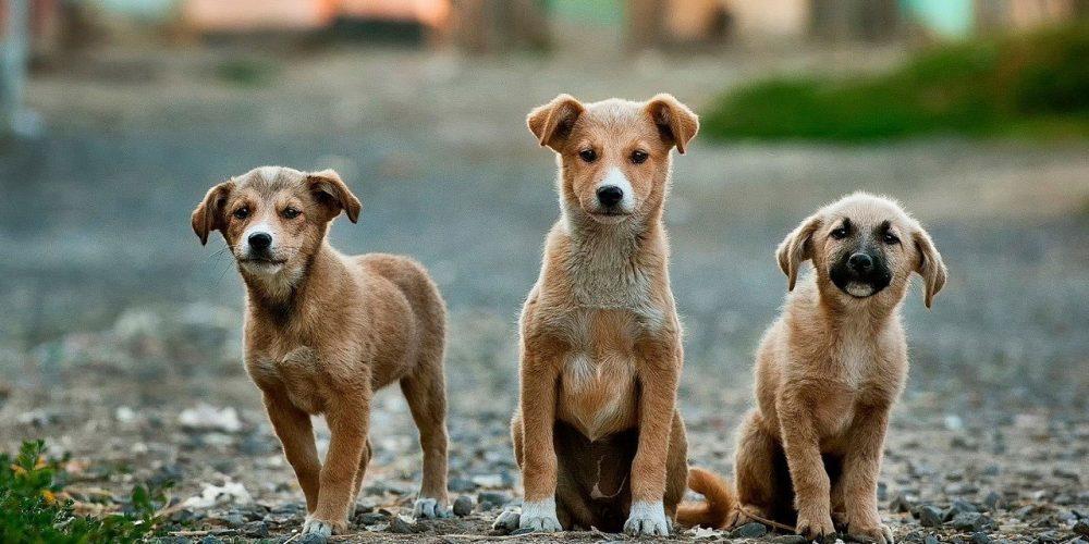 Choisir la bonne clinique pour la stérilisation chez les chiens