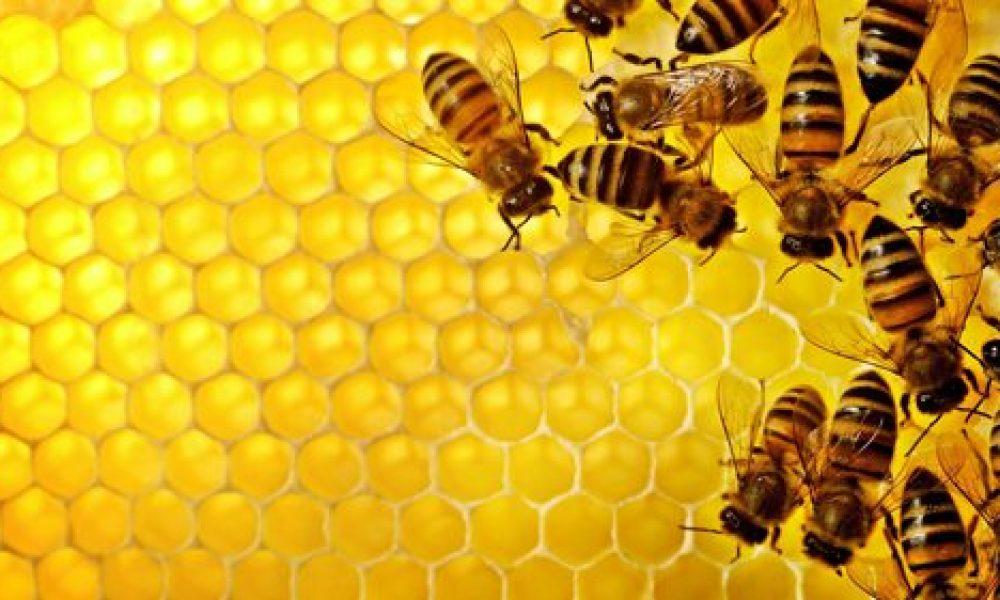 3 astuces pour éviter une invasion d'abeilles en été