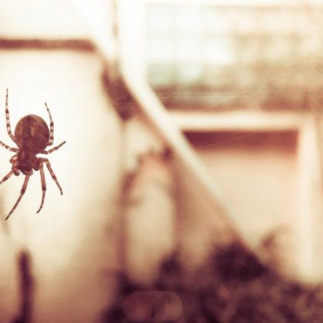 Quel type d'insectes pouvez-vous retrouver chez vous?