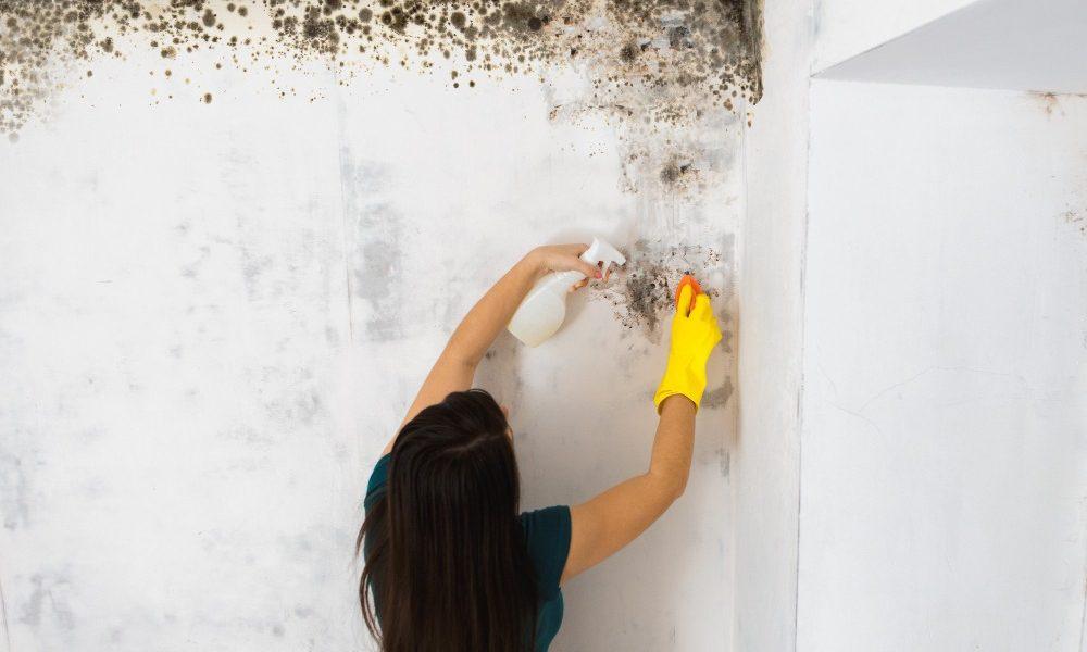 Comment éliminer définitivement la moisissure sur les murs?